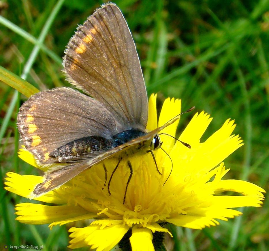dla Ciebie miła kafciu motylek i corne łocy:))) za cudny avatarek ...
