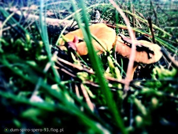 http://s12.flog.pl/media/foto_middle/10469365_grzybobranie-1.jpg