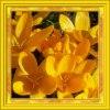 ✿ Kwiatki z mojego ogródk<br />a ✿ :: ✿ Krokusy - szafrany ✿ ht<br />tp://slajdzik.pl/slajd/wi<br />osna-w-moim-ogrodzie-8884<br />4   ✿ Zawilce - ane