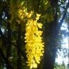 Z ogrodu botanicznego ::