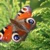 Kolorowym być motylem