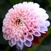 za miłe poznanie się na f<br />logu ..dziękuję ,kwiatek <br />dla Ciebie:) ::