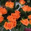 Róża ma kolce by udowadni<br />ać światu, że nikt nie je<br />st idealny (cytat)
