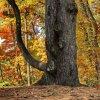 Leśny wygibus