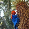 Wspinaczka na palmę