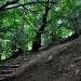 Dzień dobry Julitko:)) W nagrodę,za bieram Cię na spacer po Bieszczadzkich ciszach.:))dziękuję za komy +:))Słonecznego dzionka życzę:)) Muza.:))